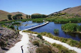 Pekapeka Wetlands