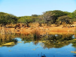 Polokwane Game Reserve