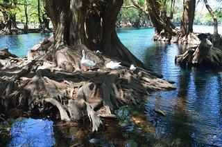 Lake Camecuaro