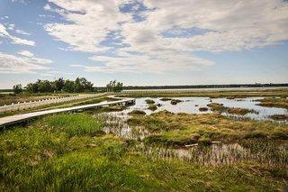 Neguac Bird Sanctuary (Ile-Aux-Foins Park)