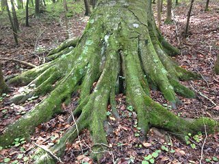 Lilley Cornett Woods Appalachian Ecological Research Station