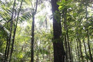 National Park Virua