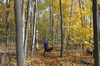 Lake Whittaker Conservation Area