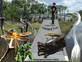 Tideland National Recreation Trail