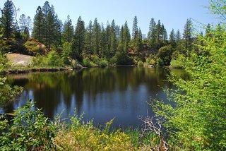 Hirschman's Pond Trail