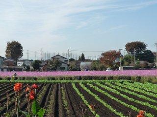 Chikumazawa Kobushi Village