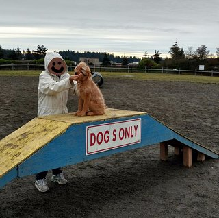 Thurston County Off Leash Dog Park