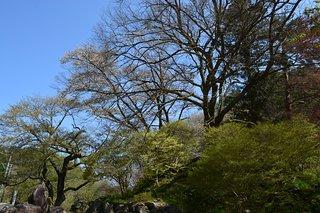 Sakuramoto Park