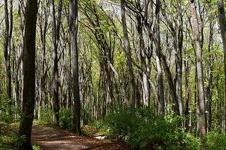 Lipowiec Nature Reserve