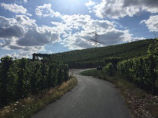 Weinlehrpfad - The educational Wine Path