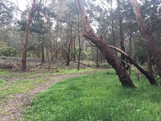 Olivers Creek Bushland Reserve