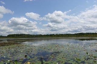 Burton Wetlands Nature Preserve