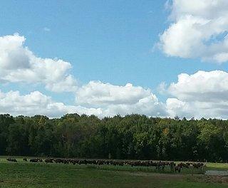 Buffalo Overlook