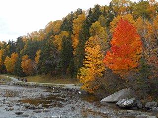 Corner Brook Stream Trail