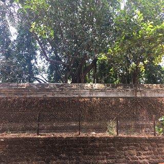 Parappukadu Devi Temple