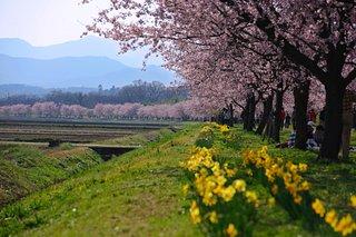 Kitaasaba Sakurazutsumi Park