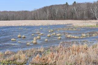 Beaver Meadow Wildlife Management Area