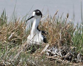 Bowdoin National Wildlife Refuge