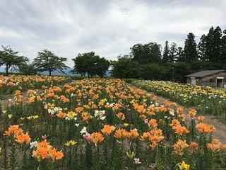 Nagai Ayame Park