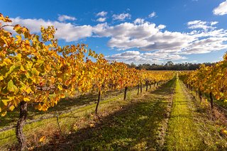 Swan Valley Vineyards