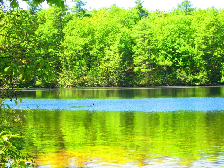 Range Ponds State park (Poland Springs) - 2020 All You Need ...