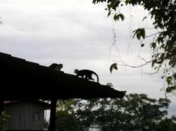 Monkeys in the morning!