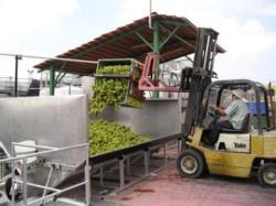 Tishbi-Baron Wine Cellars Ltd.