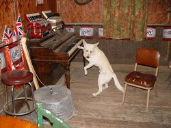 A local playing the old piano