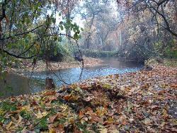 حديقة بيدويل بارك