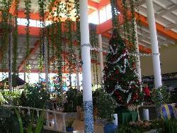 Lobby at Christmas, Playa Costa Verde