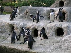 舊金山動物園