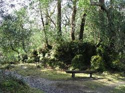 Glengariff Woods