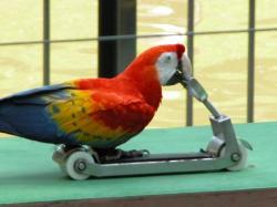Kuala Lumpur Fuglepark