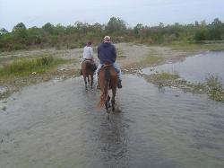 HorsePlay Niagara