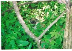 Taman Hutan Bijilo