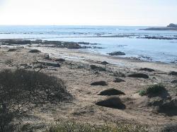 Ano Nuevo State Reserve