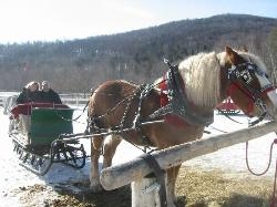 Gentle Giants Sleigh and Carriage Rides