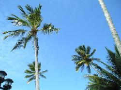 nature - palmeira tree (1770939)