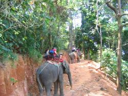 Khao Lak Nature Tour