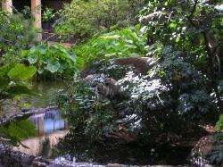 Monkeys in Hotel Garden