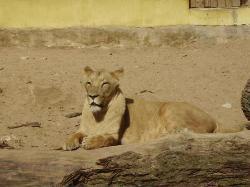 Riga Zoo