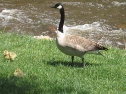 Bird friends at our BB deck