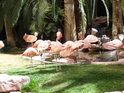 ‪Flamingo Wildlife Habitat‬