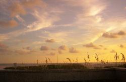 Treasure Island Seaoats Brushed Sky