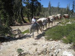 Reid Horse & Cattle Company, Inc.