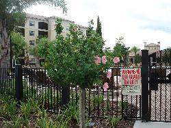 Nice grounds around gated pool area