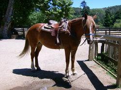 Molera Horseback Tours