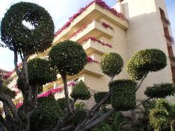 Trees at CasaMagna