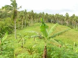 Samar Island