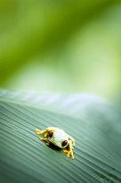 Si Como No Resort Spa & Wildlife Refuge - Greentique Costa Rica Tours